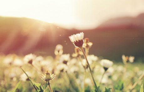 7 דרכים יעילות להכרת תודה ושינוי מציאות